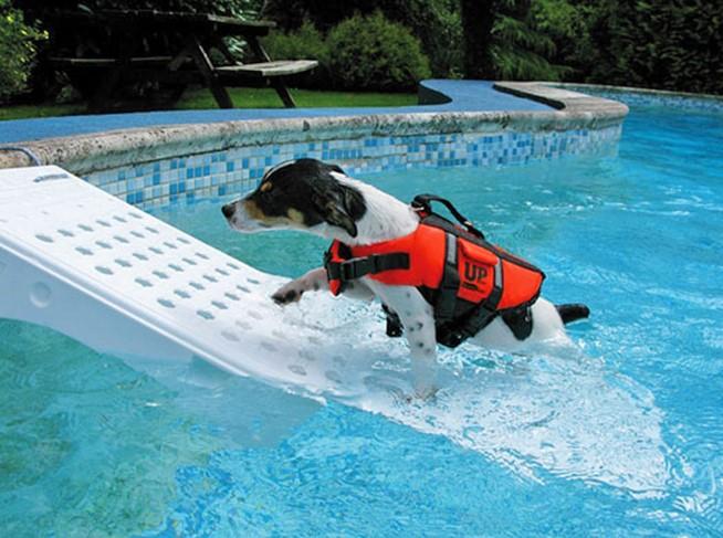 Entre los accesorios para piscinas de venta en PoolPlay, encontrarás rampas salva mascotas para piscinas