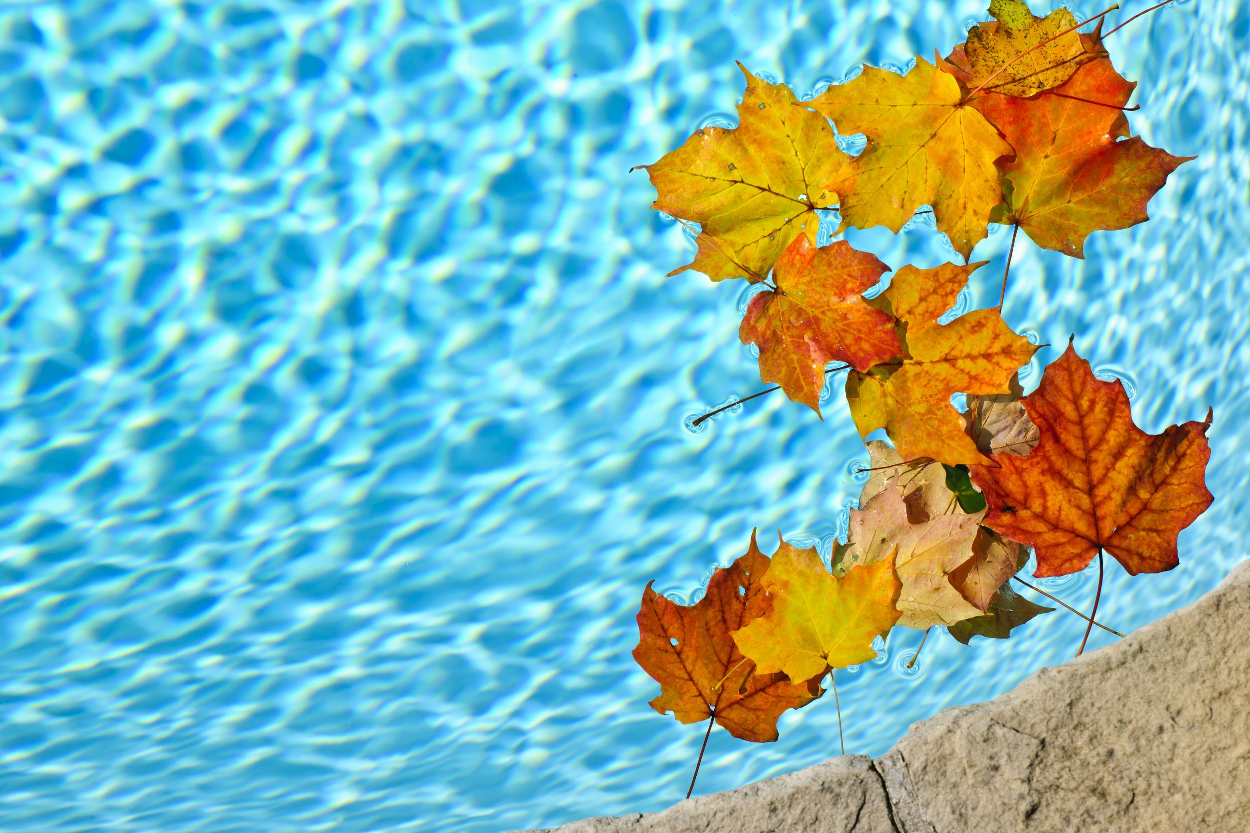 16419292 - fall leaves floating in swimming pool water