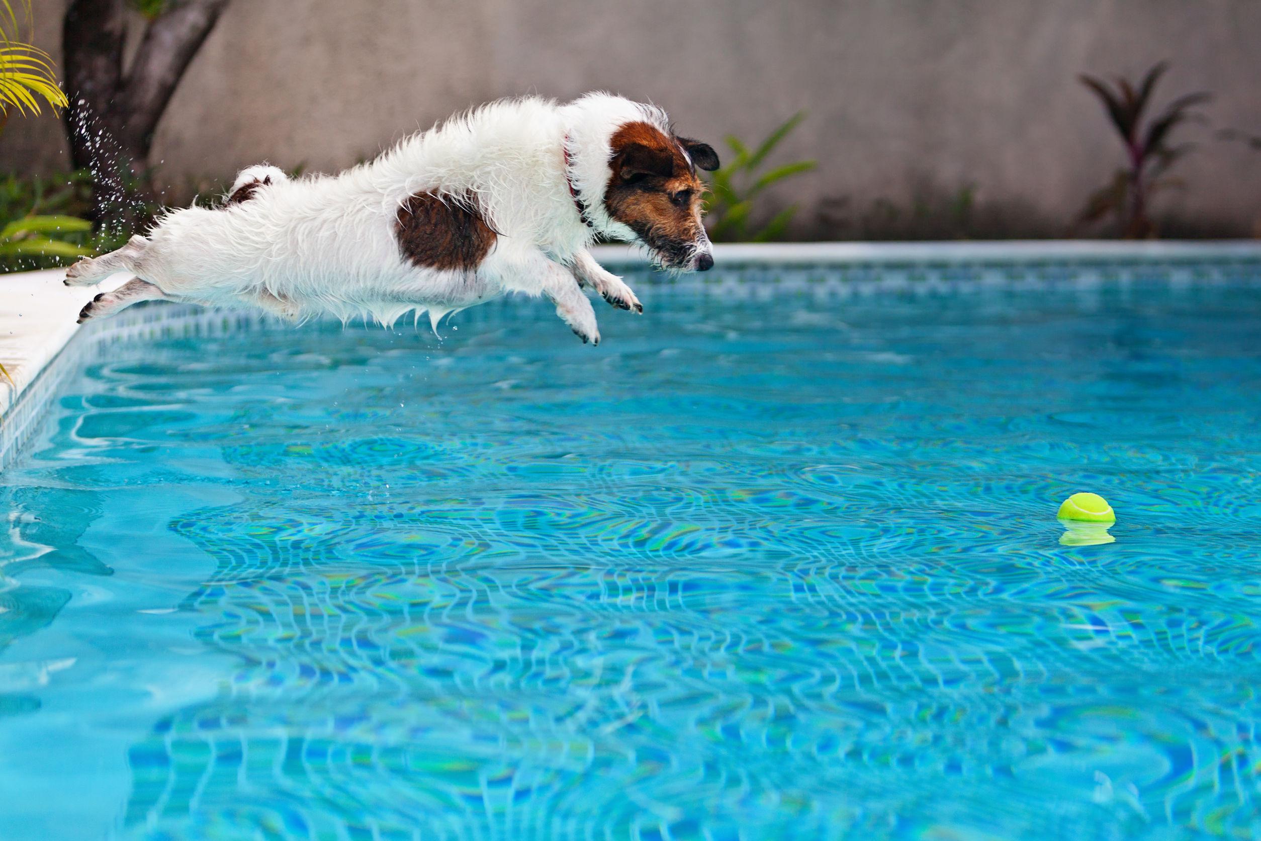 Mascotas en la piscina: todo lo que tienes que saber